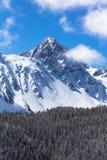 27 aprile 2017 RIDGWAY COLORADO - l'antenna del supporto Sneffels con neve vicino a tellururo Colorado, è, Ridgway, foresta Immagine Stock Libera da Diritti