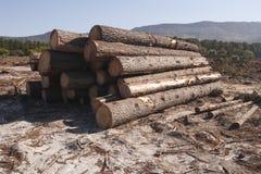 Aprire la sessione una foresta immagine stock