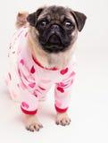 Apronte para a cama - filhote de cachorro do Pug em pijamas cor-de-rosa do coração Fotografia de Stock