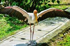 Apronte para decolar com seu largo das asas aberto Fotos de Stock