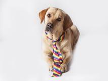 Apronte para ir a Pride Day alegre imagem de stock royalty free