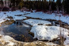 Aproximação amigável atrasada da mola, Clearwater County, Alberta, Canadá fotos de stock