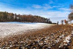 Aproximação amigável da mola nos derretimentos da neve do inverno da floresta em República Checa Tempo ensolarado no fim do inver fotografia de stock royalty free