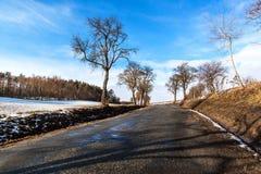 Aproximação amigável da mola nos derretimentos da neve do inverno da floresta em República Checa Tempo ensolarado no fim do inver fotos de stock royalty free