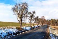 Aproximação amigável da mola nos derretimentos da neve do inverno da floresta em República Checa Tempo ensolarado no fim do inver foto de stock