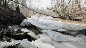 Aproximação amigável e movimento do rio através das folhas largas do vídeo de movimento lento do gelo video estoque