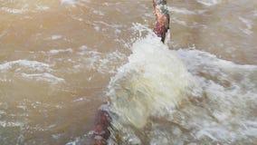 Aproximação amigável e movimento do rio através dos ramos caídos das árvores vídeo de movimento lento filme