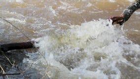 Aproximação amigável e movimento do rio através dos ramos caídos das árvores vídeo de movimento lento vídeos de arquivo