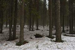 Aproximação amigável na floresta do taiga fotografia de stock royalty free