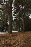 Aproximação amigável na floresta do taiga foto de stock