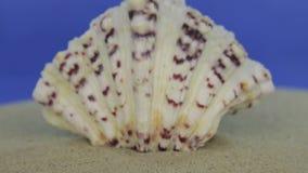 Aproximação da concha do mar, encontrando-se na areia Tiro da zorra Isolado video estoque