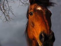 Aproximação da tempestade Imagens de Stock Royalty Free