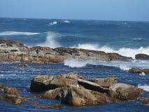 Aproximação de leões de mar no cabo da boa esperança Imagens de Stock Royalty Free