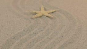 Aproximação de uma estrela do mar amarela bonita que encontra-se em um ziguezague feito da areia video estoque
