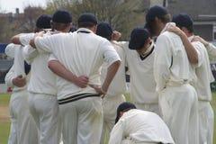 Aproximação do críquete Foto de Stock