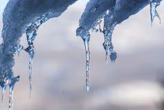 Aproximações amigáveis da neve no sol Imagem de Stock Royalty Free