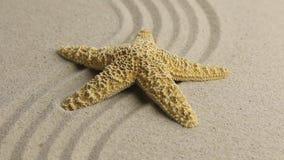 Aproximación de las estrellas de mar que mienten en la arena metrajes