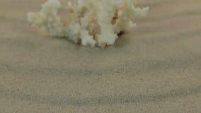 Aproximando o coral branco que está nas dunas de areia Tiro da zorra video estoque