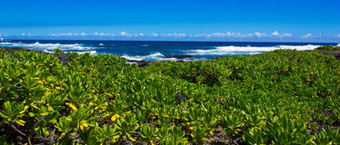 Aproximando o oceano Fotografia de Stock Royalty Free