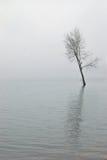 Après-midi de l'hiver Images stock