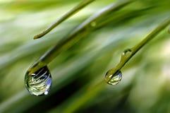 Após a chuva? Fotografia de Stock