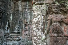 Apsara, carvings de pedra na parede do templo de Angkor Ta Prohm Fotos de Stock