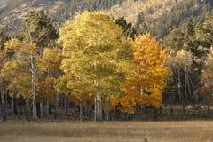 Apsens no parque nacional de montanha rochosa, Colorado Fotos de Stock Royalty Free