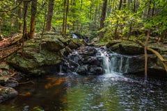 Apshawa spadki w podmiejskiej natury prezerwie w NJ otaczają bujny zieleni lasem na lata popołudniu fotografia stock