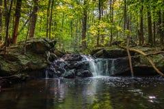 Apshawa spadki w podmiejskiej natury prezerwie w NJ otaczają bujny zieleni lasem na lata popołudniu obrazy royalty free