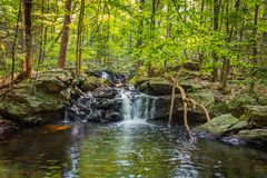 Apshawa spadki w podmiejskiej natury prezerwie w NJ otaczają bujny zieleni lasem na lata popołudniu zdjęcia royalty free