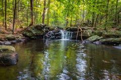 Apshawa spadki w podmiejskiej natury prezerwie w NJ otaczają bujny zieleni lasem na lata popołudniu zdjęcia stock