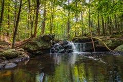 Apshawa spadki w podmiejskiej natury prezerwie w NJ otaczają bujny zieleni lasem na lata popołudniu obrazy stock