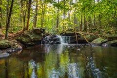 Apshawa spadki w podmiejskiej natury prezerwie w NJ otaczają bujny zieleni lasem na lata popołudniu fotografia royalty free