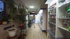 Apteka sklep w weterynaryjnej klinice zbiory wideo