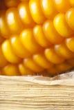 Aptitretande guld- havre på majskolven, närbild som är torr  Royaltyfri Fotografi