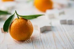Aptitretande tangerinnärbild Royaltyfri Fotografi