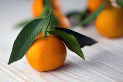 Aptitretande tangerinnärbild Royaltyfri Bild