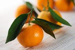 Aptitretande tangerinnärbild Royaltyfria Foton