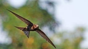 APU, die gegen den Hintergrund eines wunderbaren Hintergrundes fliegen Lizenzfreie Stockbilder
