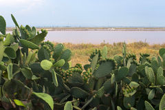 Apulia: Salt evaporation pond and cactus Royalty Free Stock Images