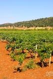 apuliaitaly vingårdar Royaltyfri Bild