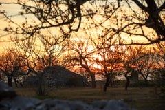 apulian επαρχία Αγροτικό τοπίο στο ηλιοβασίλεμα: trullo μεταξύ των δέντρων Ιταλία Χαρακτηριστικό αγροτικό τοπίο Apulian Στοκ φωτογραφία με δικαίωμα ελεύθερης χρήσης