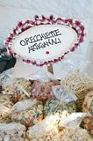 Apulian orecchiette handicraft product. Food Royalty Free Stock Images
