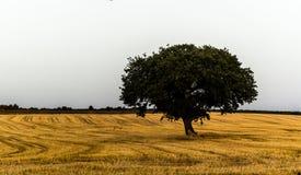 Apulien-Herbst Stockbild
