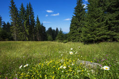 Apuseni Mountains Royalty Free Stock Photo