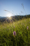Apuseni  Mountains sunrise Royalty Free Stock Photos