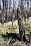aq δάσος πυρκαγιάς Στοκ Εικόνες
