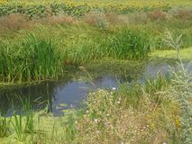 Aqa nature Royalty Free Stock Photos