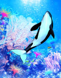 Aqautica. A powerful killer whale swims through the sea - a wonderful underwater scene with all its marine life Royalty Free Stock Photos
