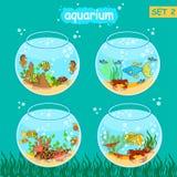 Aquário ajustado com peixes e decoração Grupo de Fishbowl Fotografia de Stock Royalty Free